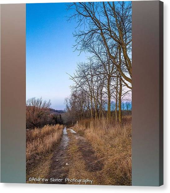 Forest Canvas Print - Retzer Growing by Andrew Slater