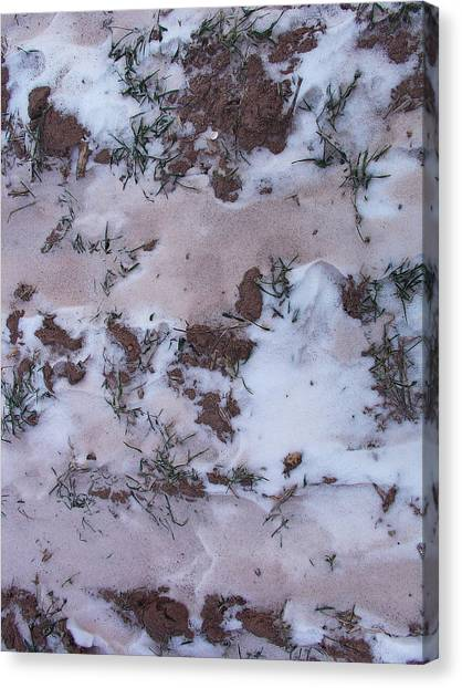 Reversing The Roles - Soil Dusting A Crispy Snow Canvas Print