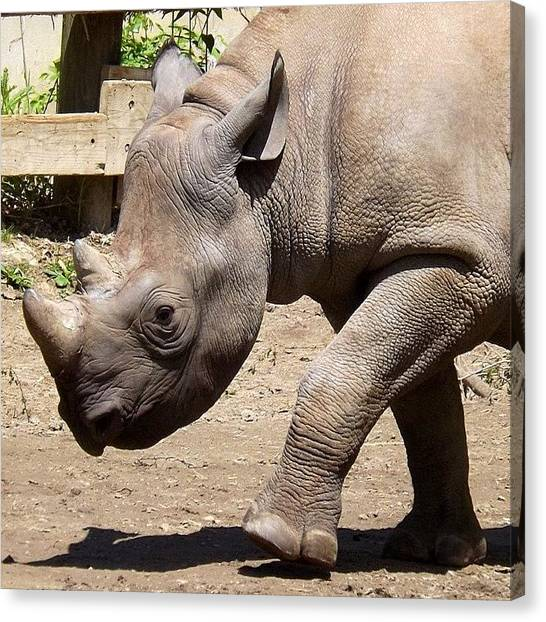 Rhinos Canvas Print - #rhino #cleveland #clevelandgram by Pete Michaud