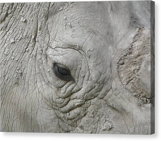 Rhino Eye Canvas Print