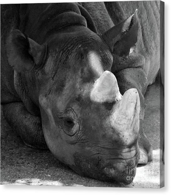 Rhino Nap Canvas Print