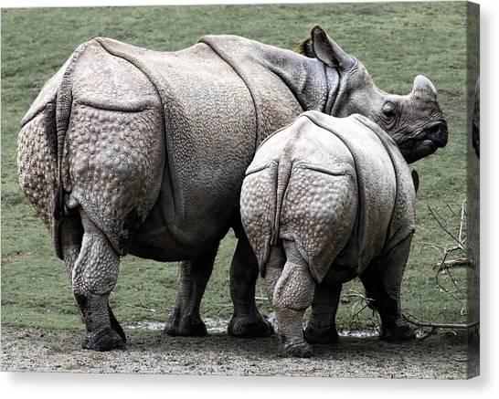 Rhinocerus Canvas Print - Rhinoceros Mother And Calf In Wild by Daniel Hagerman