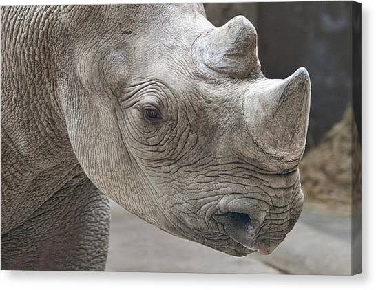 Rhinos Canvas Print - Rhinoceros by Tom Mc Nemar