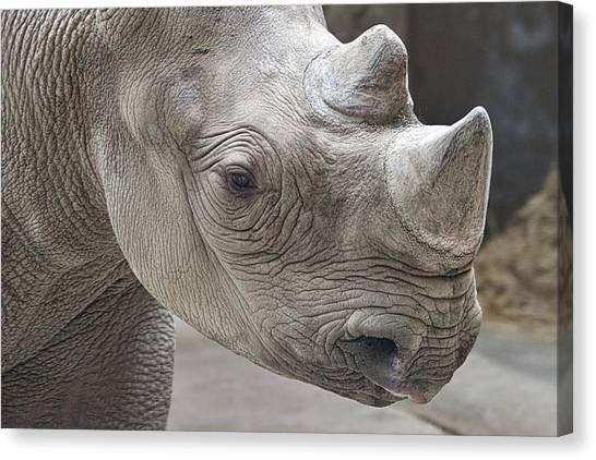 Rhinoceros Canvas Print - Rhinoceros by Tom Mc Nemar