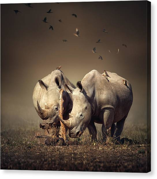 Rhinos Canvas Print - Rhino's With Birds by Johan Swanepoel