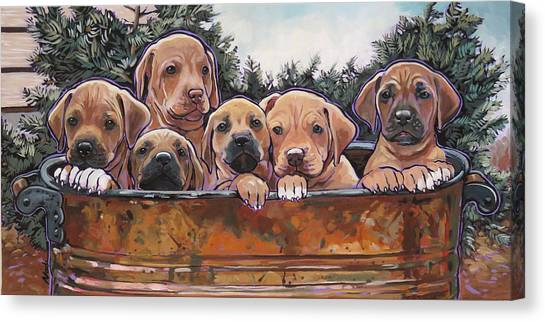 Rhodesian Ridgeback Puppies Canvas Print