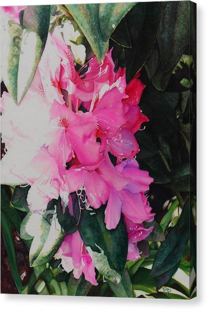Rhodies Canvas Print