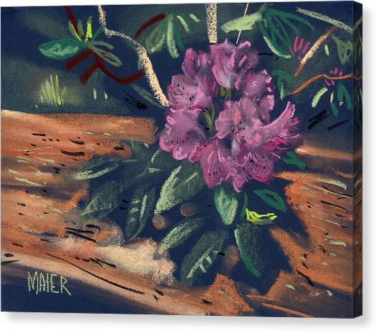 Rhododendron Canvas Print by Donald Maier