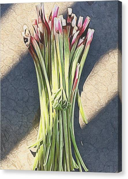 Still Life Canvas Print - Rhubarb by Michele Meehl