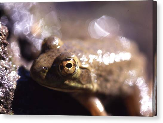 Ribbit Canvas Print by Curtis J Neeley Jr
