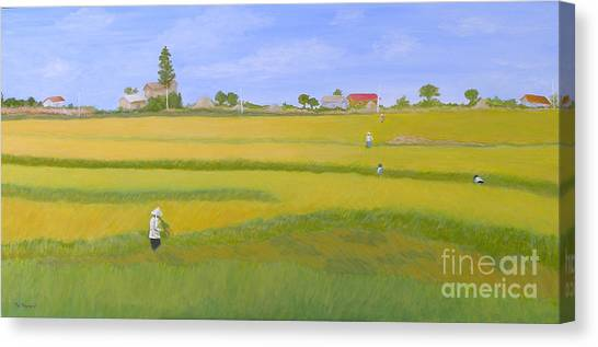 Rice Field In Northern Vietnam Canvas Print by Thi Nguyen