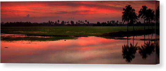 Fine Art India Canvas Print - Rice Paddies At Sunset by Andrew Soundarajan