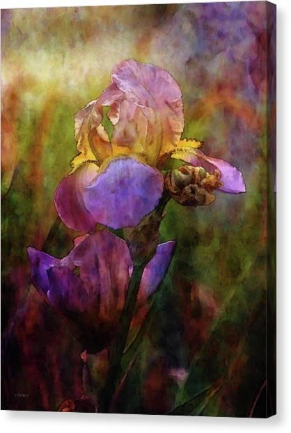 Rich Purple Irises 0056 Idp_22 Canvas Print