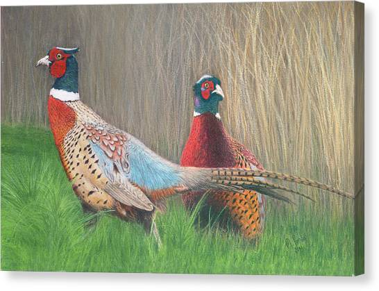 Ring-necked Pheasants Canvas Print by Marlene Piccolin