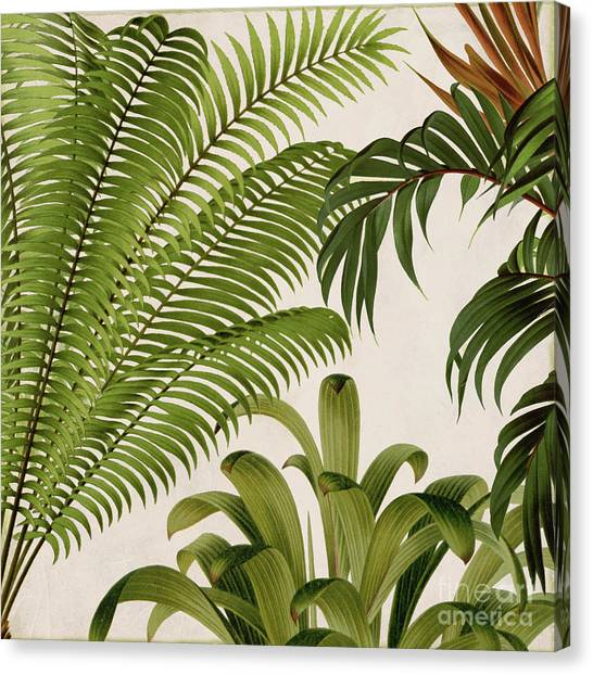 Banana Tree Canvas Print - Rio II by Mindy Sommers