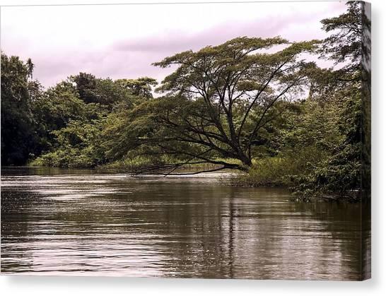 Riparian Rainforest Canopy Canvas Print