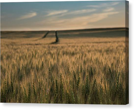 Ripening Wheat No. 1 Canvas Print by Al White
