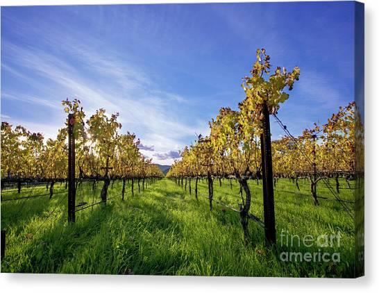 Sonoma Valley Canvas Print - Rise And Shine by Jon Neidert