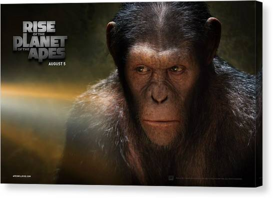 Orangutans Canvas Print - Rise Of The Planet Of The Apes by Maye Loeser