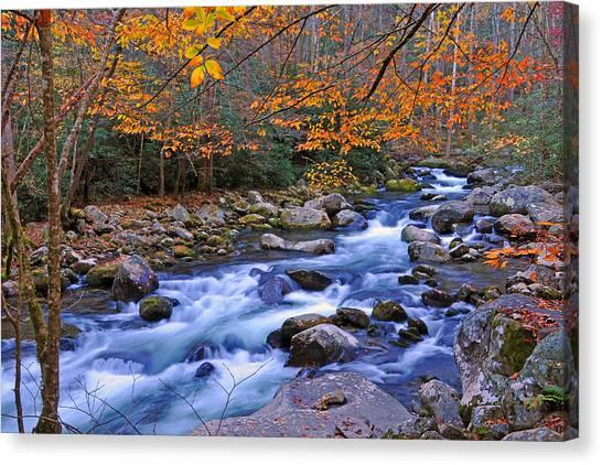 River Birch Overhangs Big Creek Canvas Print