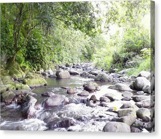 River In Adjuntas Canvas Print