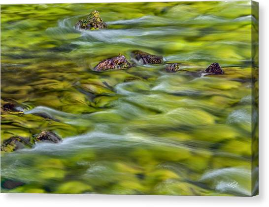 River Moss Canvas Print by Leland D Howard
