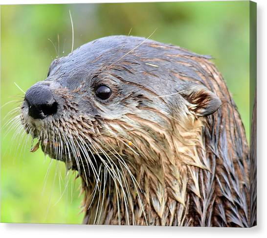 River Otter Canvas Print