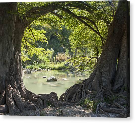 River Through Trees Canvas Print
