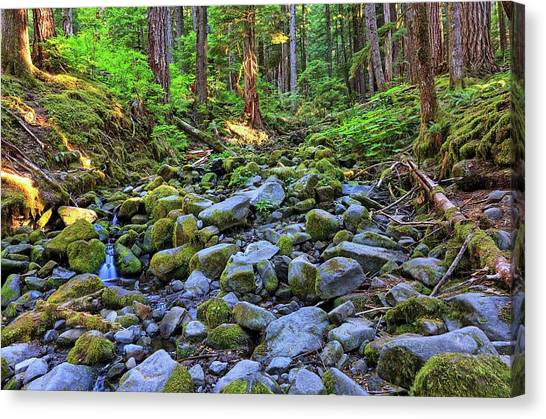 Riverbed Full Of Mossy Stones With Small Cascade Canvas Print