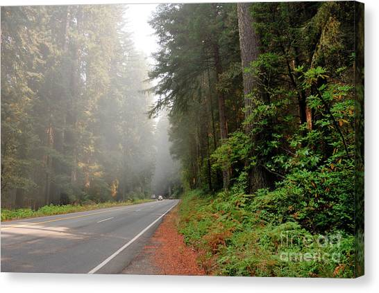 Redwood Forest Canvas Print - Road Through Redwoods by Betty LaRue