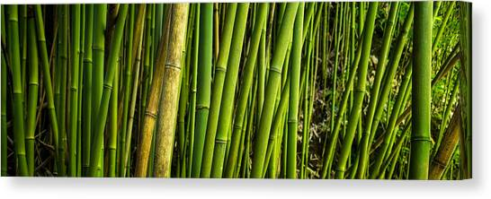 Road To Hana Bamboo Panorama - Maui Hawaii Canvas Print