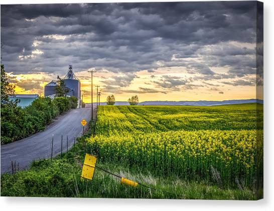 Road To Mann's Lake Canvas Print