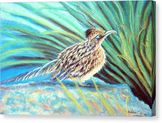 Roadrunner Fluffing Sold   Pastel Canvas Print