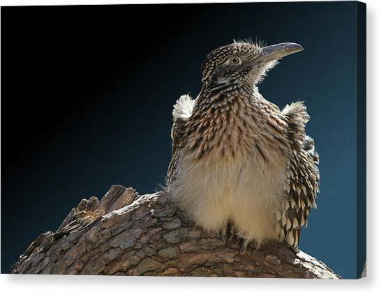 Roadrunner On A Log Canvas Print