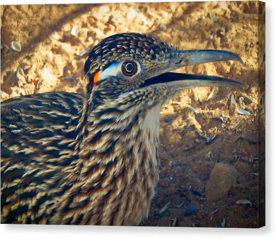 Roadrunner Portrait Canvas Print