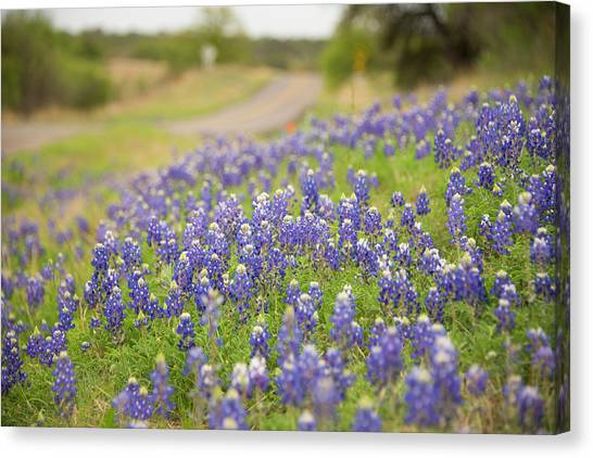Country Roads Canvas Print - Roadside Attraction by Aaron Bedell