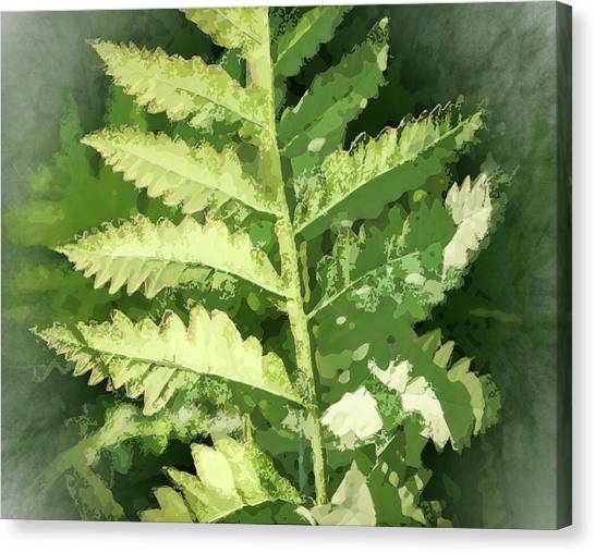 Roadside Fern, Abstract 2 - Canvas Print