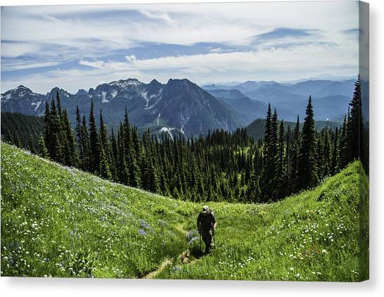Roaming Above The Trees. Canvas Print