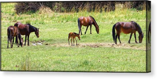 Canvas Print featuring the photograph Roaming Freely by Elaine Malott