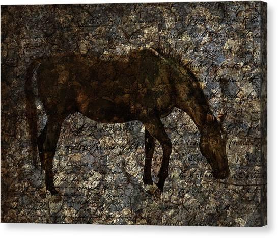 Roan Stallion Canvas Print
