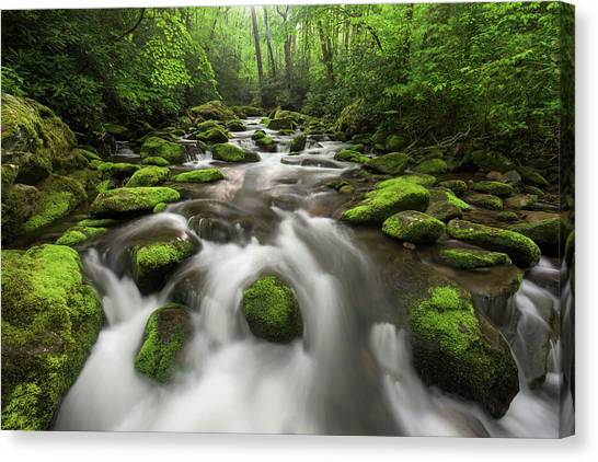 Roaring Fork Great Smoky Mountains National Park Tennessee Canvas Print by Mark VanDyke