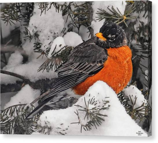 Canvas Print - Robin In March Snowstorm In Michigan by Peg Runyan