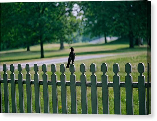 Robin On A Fence Canvas Print by Lone Dakota Photography