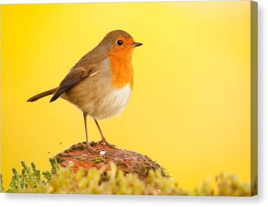Robin On Yellow Canvas Print