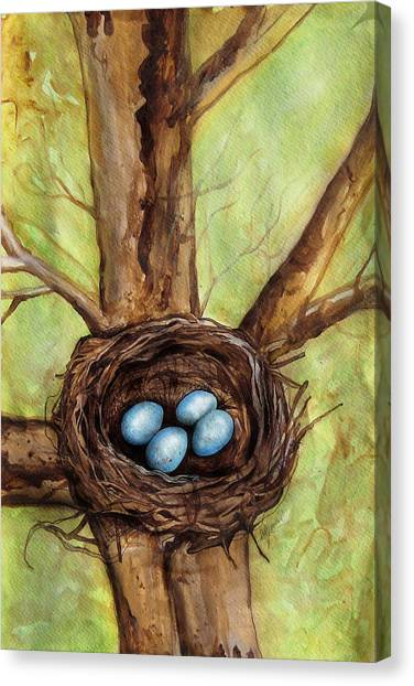 Robin's Nest Canvas Print by Carrie Jackson