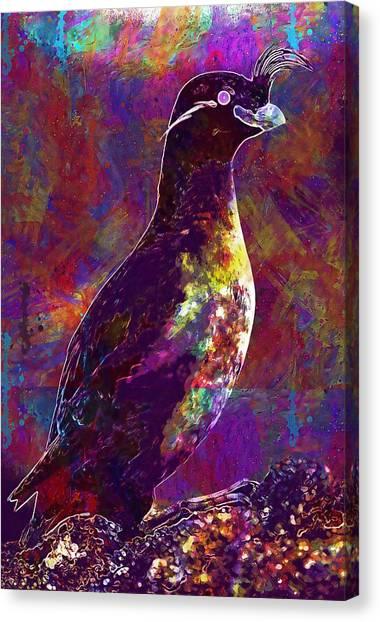 Auklets Canvas Print - Rock Bird Auklet Crested Birds  by PixBreak Art