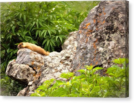 Groundhogs Canvas Print - Rock Chuck by Lana Trussell