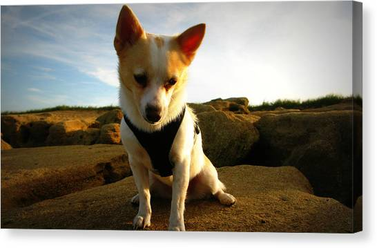 Rock Climbing Rocko Canvas Print by Mandy Shupp