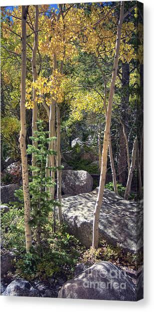 Rock Garden 2 Canvas Print