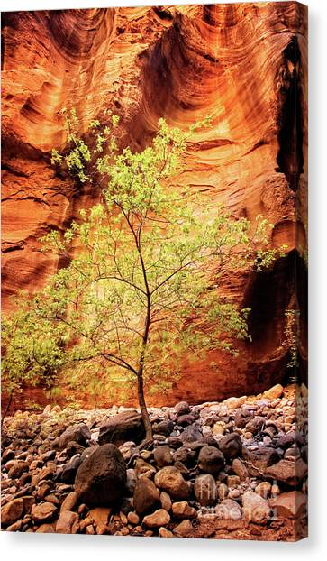Canvas Print featuring the photograph Rock Tree by Scott Kemper